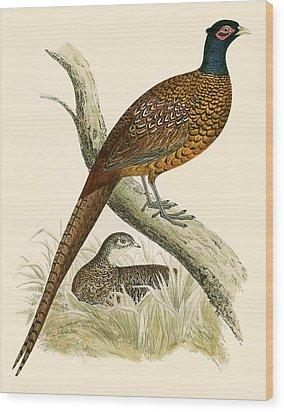 Pheasant Wood Print by Beverley R Morris
