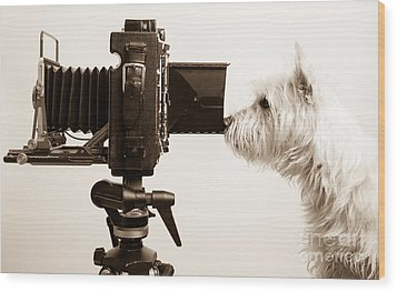 Pho Dog Grapher Wood Print by Edward Fielding