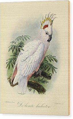Pied Cockatoo Wood Print by J G Keulemans