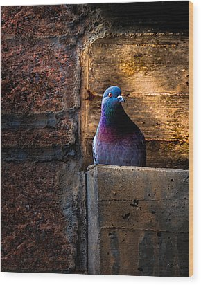 Pigeon Of The City Wood Print by Bob Orsillo