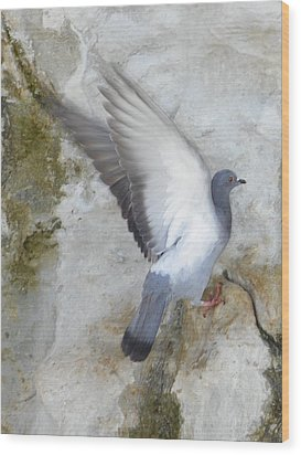Pigeon Spreading Wings For Takeoff Wood Print by Noreen HaCohen