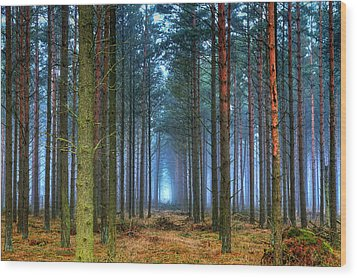 Pine Forest In Morning Fog Wood Print by EXparte SE