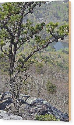 Pine Tree On A Mountain Wood Print by Susan Leggett