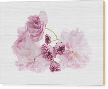 Pink Cherry Blossoms Wood Print by Elena Elisseeva