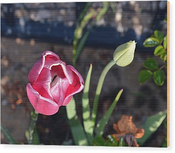Pink Flower And Bud Wood Print by Brent Dolliver