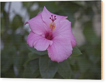 Pink Hibiscus Wood Print by Terry Horstman