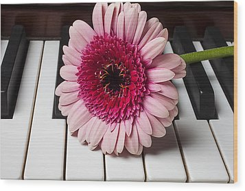 Pink Mum On Piano Keys Wood Print by Garry Gay