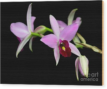 Pink Orchids Cascading Wood Print by Sabrina L Ryan