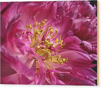 Pink Peony Flower Macro Wood Print by Jennie Marie Schell