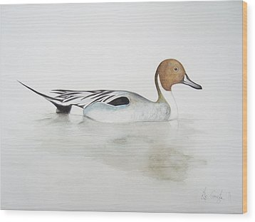 Pintail Duck Wood Print by Ele Grafton