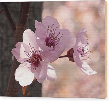 Plum Blossoms Wood Print by Rona Black