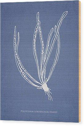 Polypodium Subevenosum Wood Print by Aged Pixel