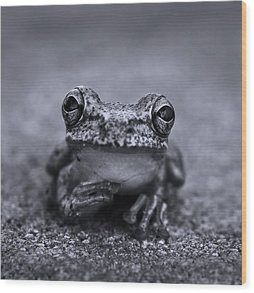 Pondering Frog Bw Wood Print by Laura Fasulo
