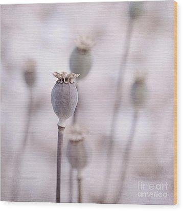 Poppy Queens Wood Print by Priska Wettstein
