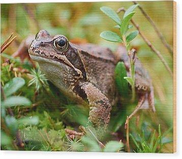 Portrait Of A Frog Wood Print by Jouko Lehto