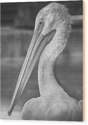 Portrait Of A Pelican Wood Print by Jon Woodhams