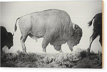 Portrait Of A Yellowstone Bison Wood Print by Shane Linke