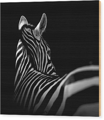 Portrait Of Zebra In Black And White II Wood Print by Lukas Holas