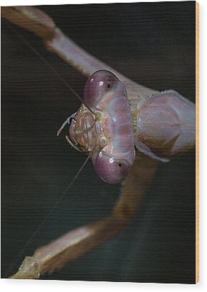 Praying Mantis 3 Wood Print by Angela A Stanton