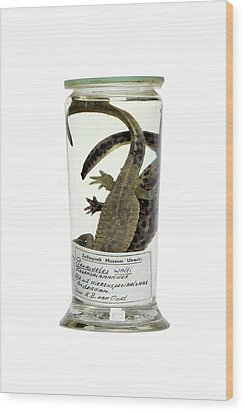Preserved Newts Wood Print by Gregory Davies