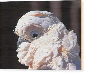 Pretty In Pink Salmon-crested Cockatoo Portrait Wood Print by  Andrea Lazar
