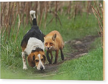 Probably The World's Worst Hunting Dog Wood Print by Mircea Costina Photography
