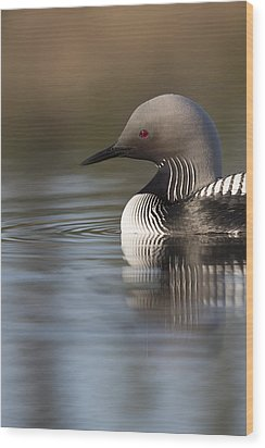 Profile Of A Pacific Loon Wood Print by Tim Grams