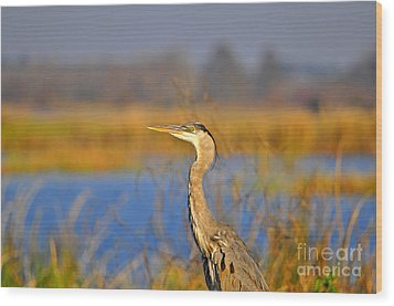 Proud Profile Wood Print by Al Powell Photography USA