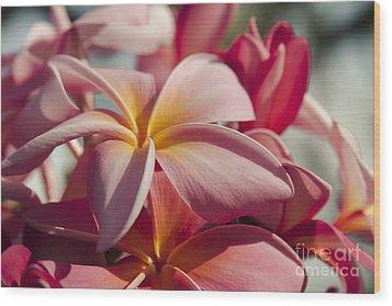 Pua Melia Ke Aloha Maui Hikina Wood Print by Sharon Mau