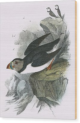 Puffin Wood Print by English School