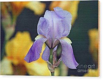 Purple Iris Wood Print by Karen Adams