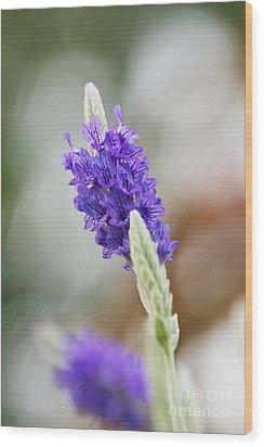Purple Sage Wood Print by Pamela Gail Torres