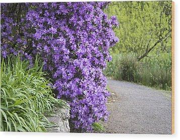 Purple Spring Wood Print by Priya Ghose