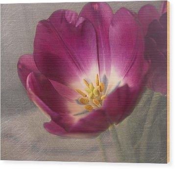 Purple Tulip Wood Print by Kim Hojnacki