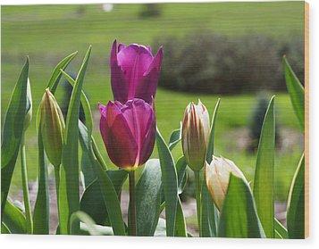 Purple Tulips Garden Art Print Tulip Flowers Wood Print by Baslee Troutman