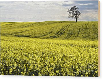 Rape Landscape With Lonely Tree Wood Print by Heiko Koehrer-Wagner