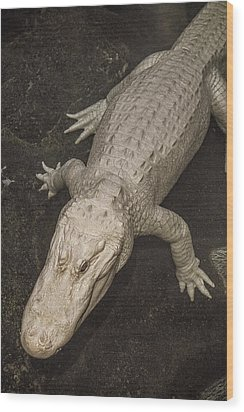 Rare White Alligator Wood Print by Garry Gay