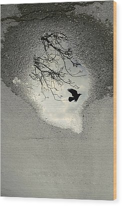 Raven Reflection Wood Print by Cambion Art