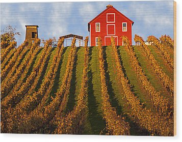 Red Barn In Autumn Vineyards Wood Print by Garry Gay