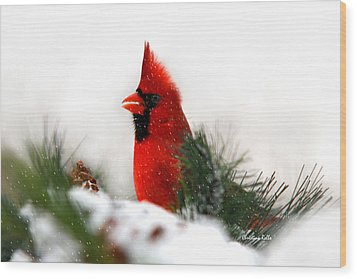 Red Cardinal Wood Print by Christina Rollo