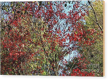 Red Fall Foliage Wood Print by Tina M Wenger