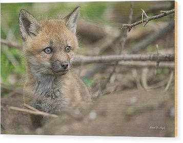 Red Fox Kit Wood Print by Everet Regal