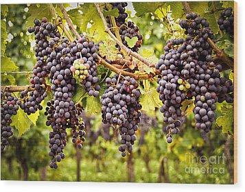 Red Grapes In Vineyard Wood Print by Elena Elisseeva