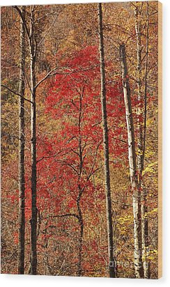 Red Leaves Wood Print by Patrick Shupert