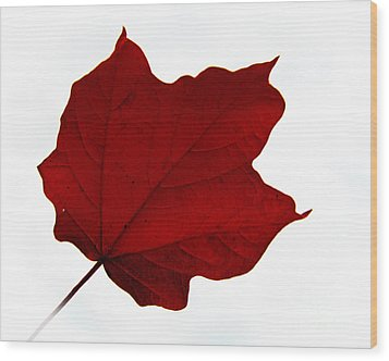 Red Maple Now Wood Print by Tina M Wenger