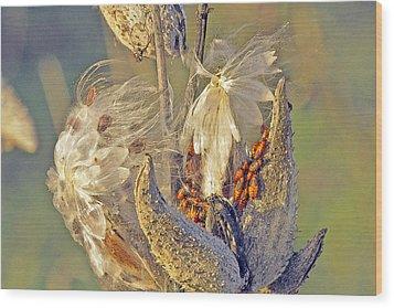 Red Milkweed Beetles Wood Print by Constantine Gregory