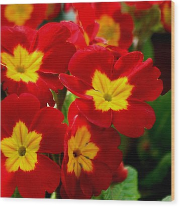 Red Primroses Wood Print by Art Block Collections