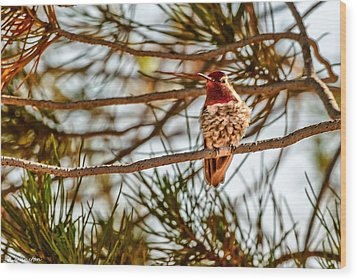 Red Rock Country Hummingbird Wood Print by Bob and Nadine Johnston