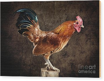 Red Rooster On Fence Post Wood Print by Cindy Singleton