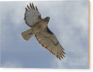 Red-tail Hawk #3094 Wood Print by J L Woody Wooden